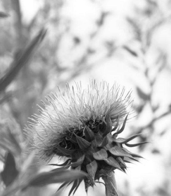 Flor White  Black